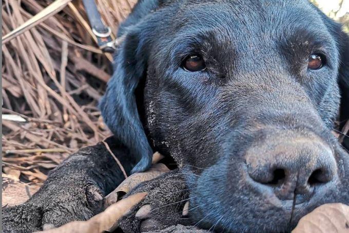 Bombeiros encontram corpo do cão que morreu durante buscas em Santa Catarina
