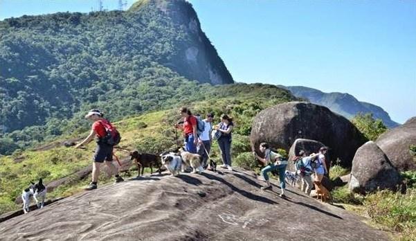 A prática do Dogtrekking faz bem aos cães?