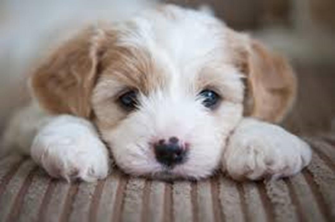 Pet shops na Califórnia só podem vender cães e gatos resgatados