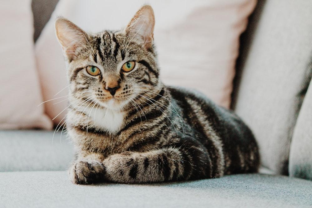EUA vai parar de usar gatos na pesquisa de toxoplasmose