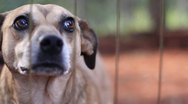 Saiba como denunciar casos de maus-tratos aos animais