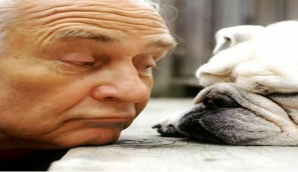 Como você trata o seu animal de estimação?