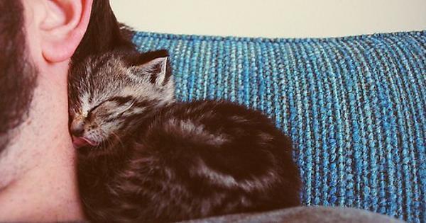 Por que os gatos gostam de dormir em cima da gente?
