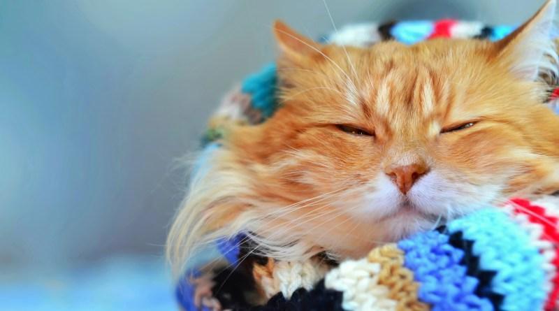 Pets também sofrem com baixa umidade do ar
