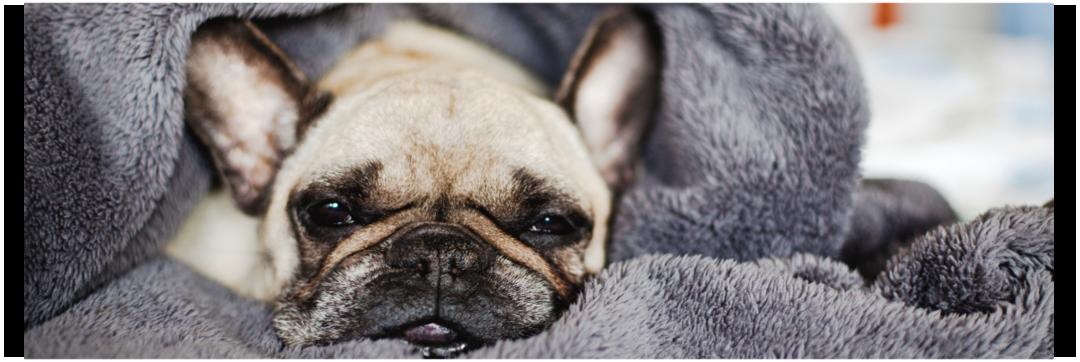 Problemas respiratórios e e articulares em cães e gatos durante o inverno