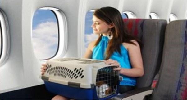 O que fazer em casos de acidentes aéreos ou extravios de animais a bordo?