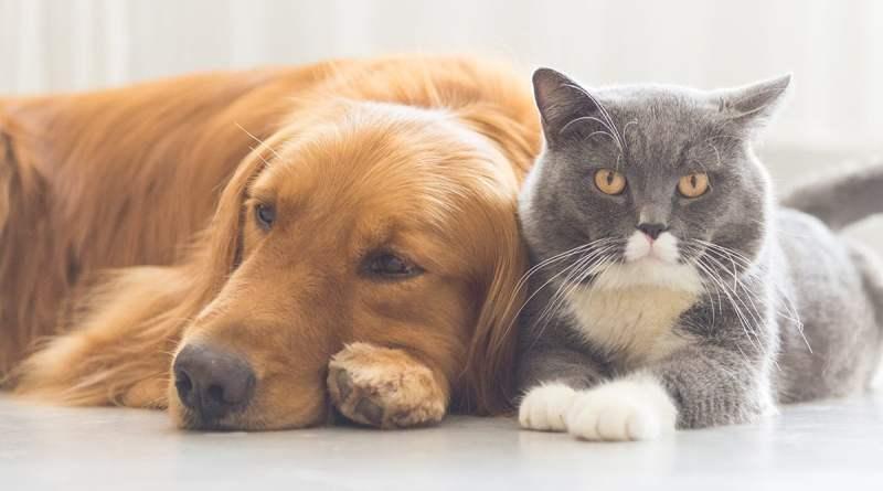 Governo Digital lança Pet Amigo: serviço de cadastro de animais no Paraná