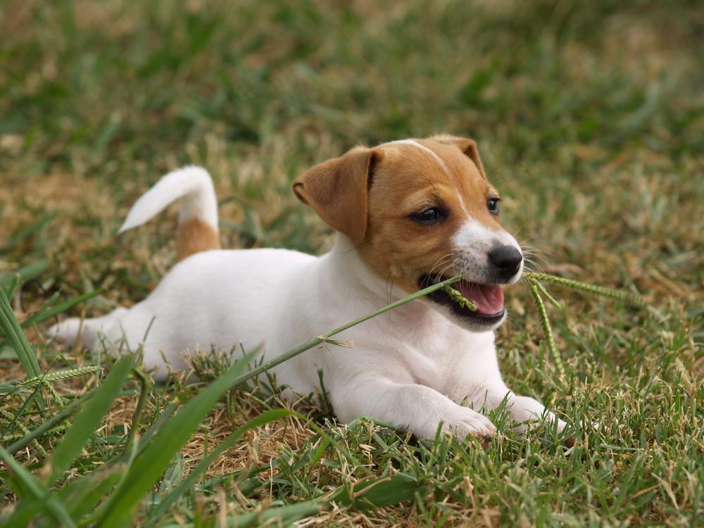Dia Mundial do Meio Ambiente: cães e gatos  fazem parte desta comemoração?
