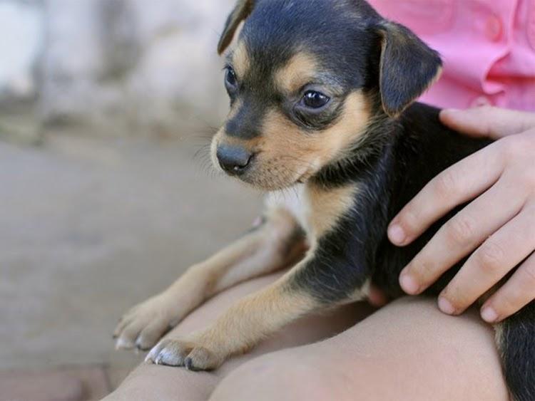 Adoção: seis fatores que devem ser levados em conta antes de levar o pet para casa