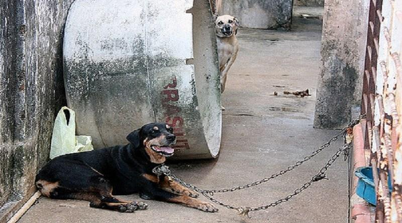 Uso de correntes poderá ser considerado como maus-tratos aos animais