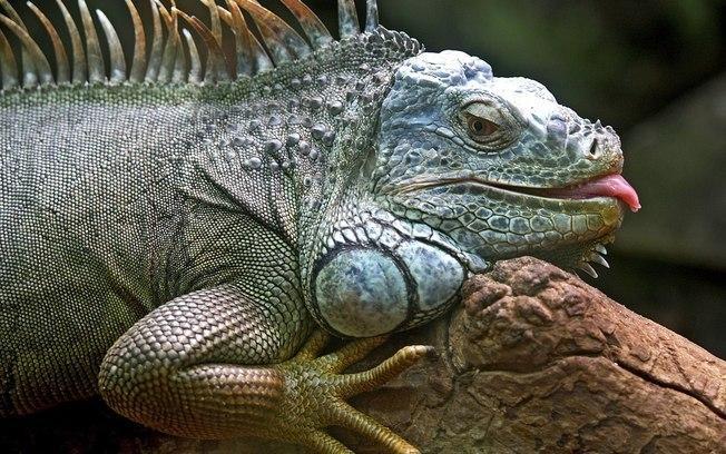 Projeto de Lei torna a venda de animais exóticos e silvestres mais rigorosa
