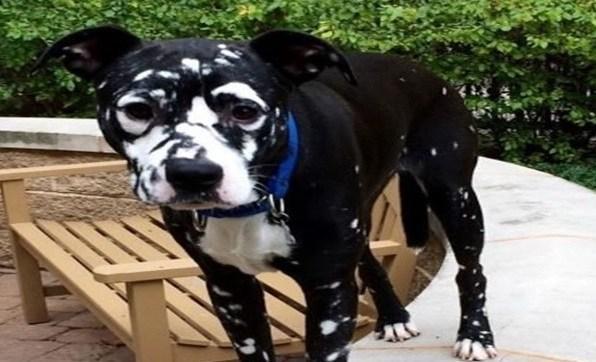 Você sabia que os animais também podem ter Vitiligo?