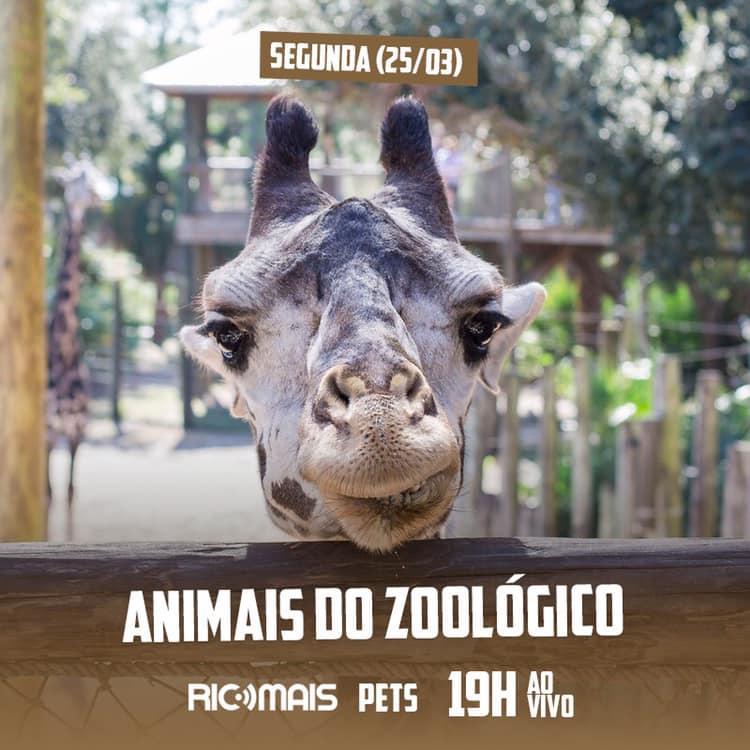 RIC Play apresenta - Canal de Estimação: Animais do Zoológico