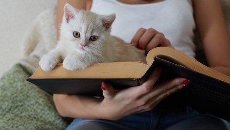 Por que os gatos se sentam sobre o que estamos lendo?