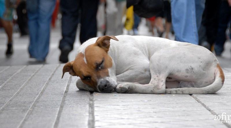 Em Curitiba são registradas duas denúncias de maus-tratos a animais por dia