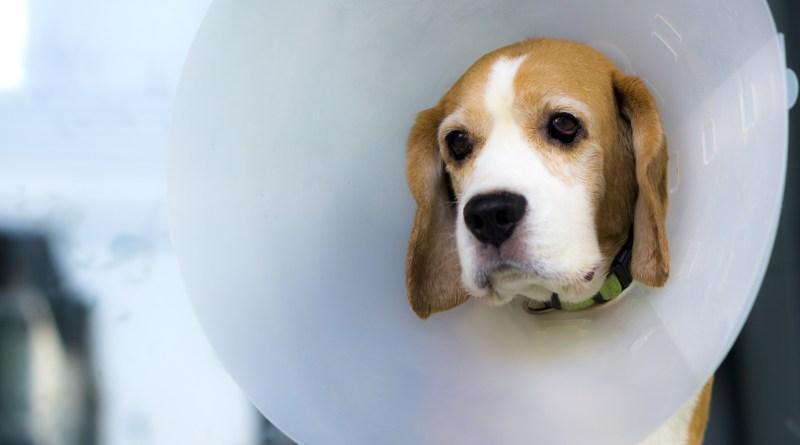 Em Curitiba, atestado de castração animal pode se tornar obrigatório