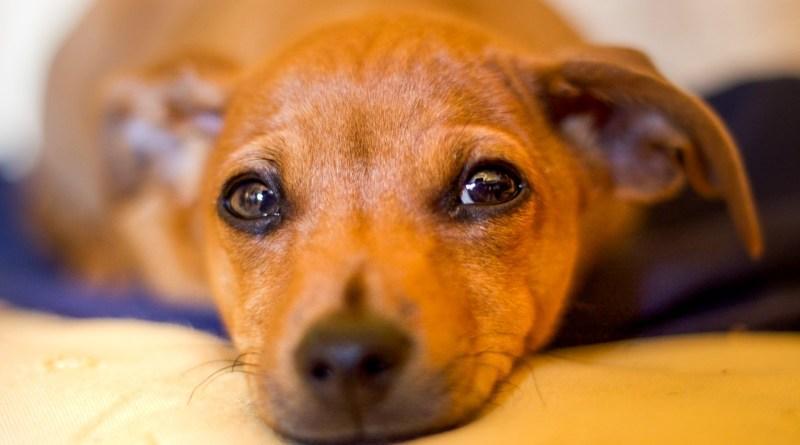 Projeto de lei Dezembro Verde, contra o abandono de animais, é aprovado em Curitiba