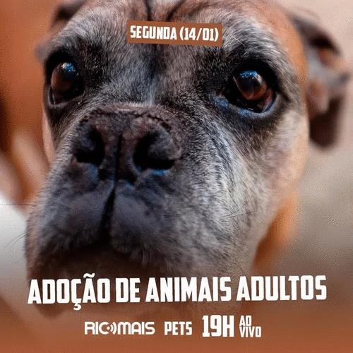 RIC Mais Pets: adoção de animais adultos
