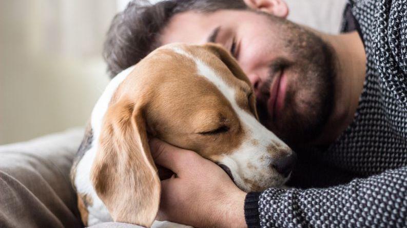 Cientistas americanos testam a empatia dos cães a humanos em situação de estresse