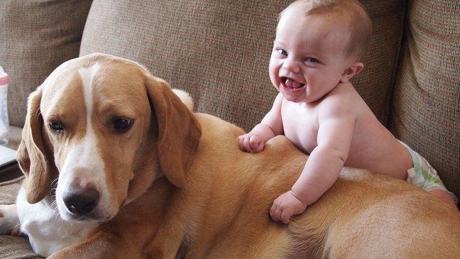 8 dicas para educar o cão a receber o bebê da família