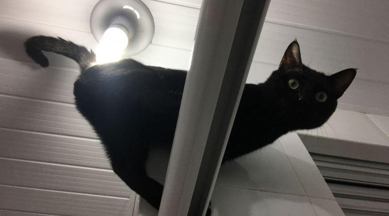 Por que os gatos gostam de lugares altos?