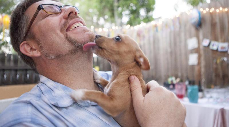 Estudo confirma que os cachorros conseguem sentir se uma pessoa é confiável
