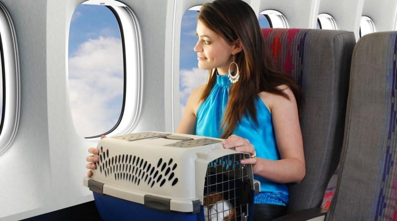O que saber antes de viajar com seu pet