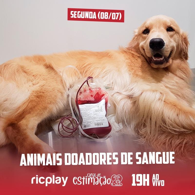 RIC Play apresenta - Programa de Estimação: animais doadores de sangue