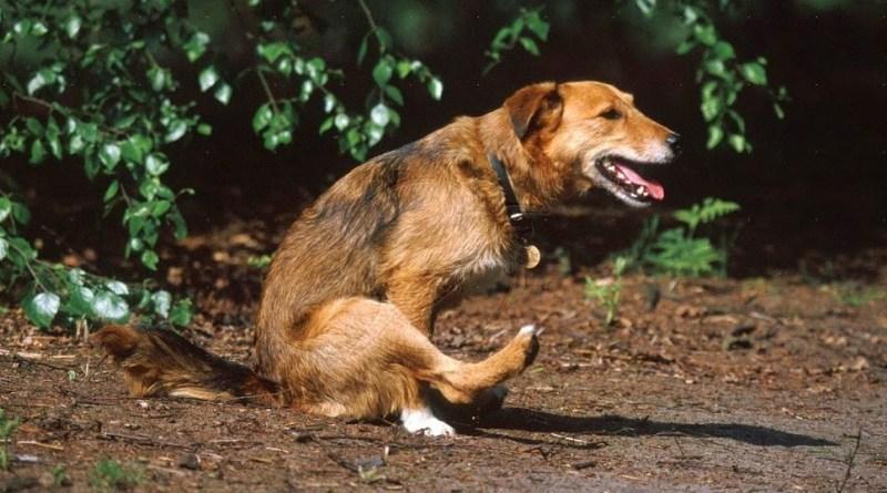 5 medidas preventivas para que seu pet não tenha parasitas intestinais