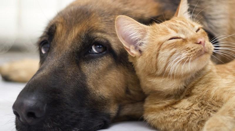 Seguradora dá dicas para bem-estar de pets e ressalta assistência especial para cães e gatos