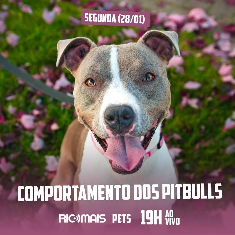 RIC Mais Pets: comportamento dos Pitbulls