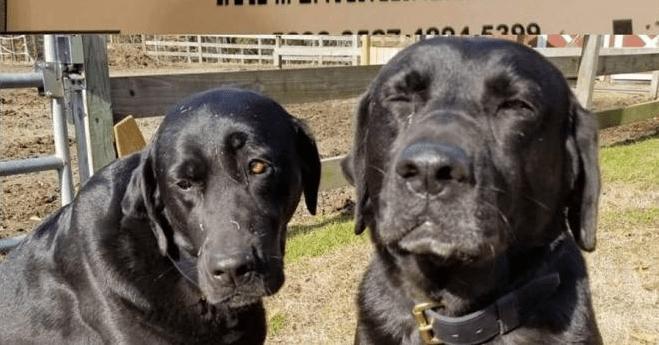 Cães invadem caminhão dos Correios e comem almoço do carteiro