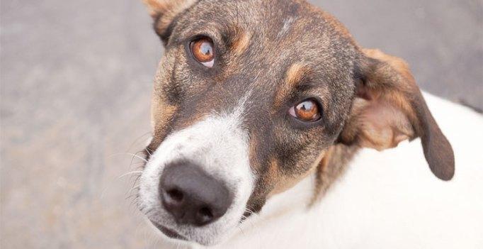 Prefeitura de Curitiba desenvolve teste que ajuda a escolher animal para adoção