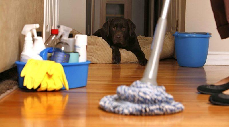 Limpeza da casa com pets exige cuidados especiais