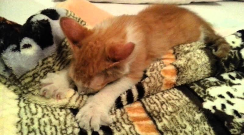 O  que fazer se o seu gato tem o hábito de mamar na mantinha?