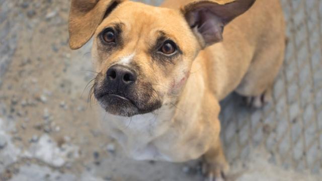 Curitiba deve ter ambulância veterinária para atender animais abandonados feridos