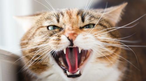 Pequenos hábitos podem prevenir a agressividade do seu gato