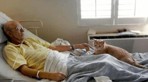 Pacientes internados no SUS poderão receber a visita dos seus pets