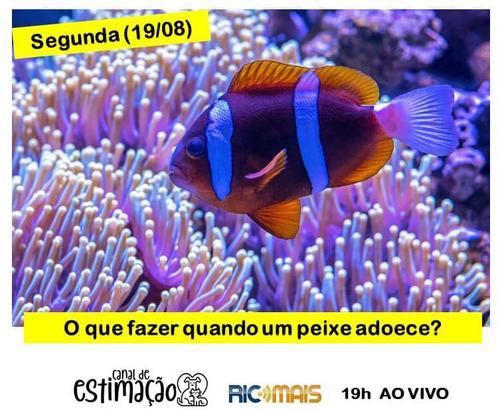 RIC Play apresenta - Programa de Estimação: como cuidar dos peixes