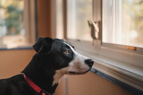 STJ decide que condomínio não pode proibir animais domésticos