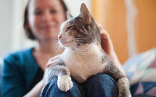Gatos são o reflexo de seus donos, aponta pesquisa