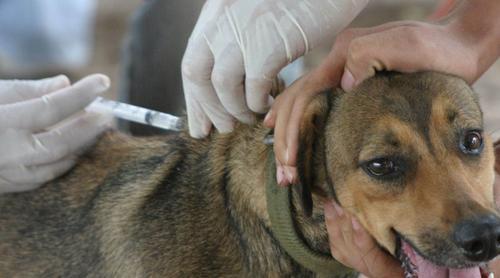 Saiba o que é a Raiva Animal e como manter seu pet protegido