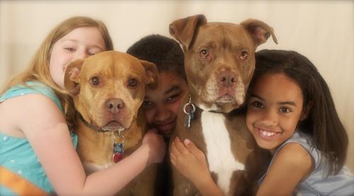 Os benefícios e cuidados no convívio das crianças com os animais