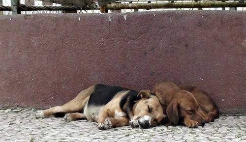Participe: pesquisa analisa fatores que levam ao Abandono de Animais
