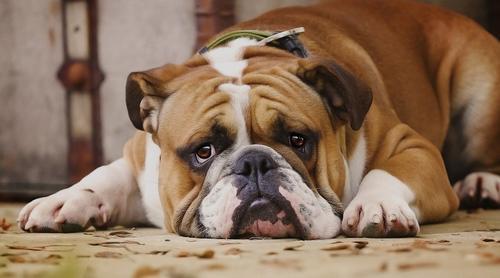 Humanos projetam suas aflições e estressam seus animais, diz pesquisa