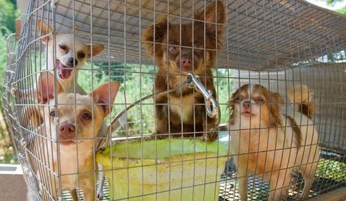 Resolução n.º 1.069 - saúde e bem-estar dos animais expostos em petshops