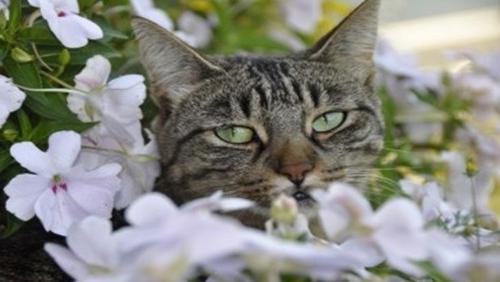 Gatos: saiba quais plantas são nocivas a eles