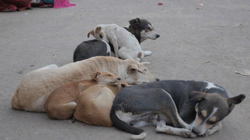 Holanda é o primeiro país sem cães nas ruas sem ter tido que sacrificá-los