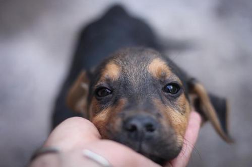 Ter ou não ter um cachorro? A genética pode explicar essa decisão