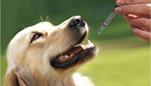 Cuidados ao dar calmantes ou tranquilizantes aos animais